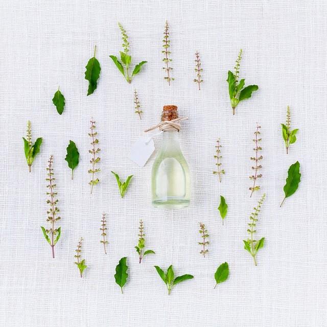 plantes adaptogènes stress